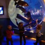 aquarium007